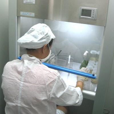 Dendrobium Officinale Production