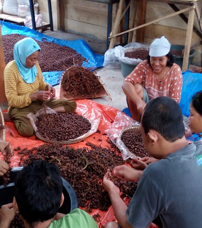 Sorting and Peeling of the Raw Materials